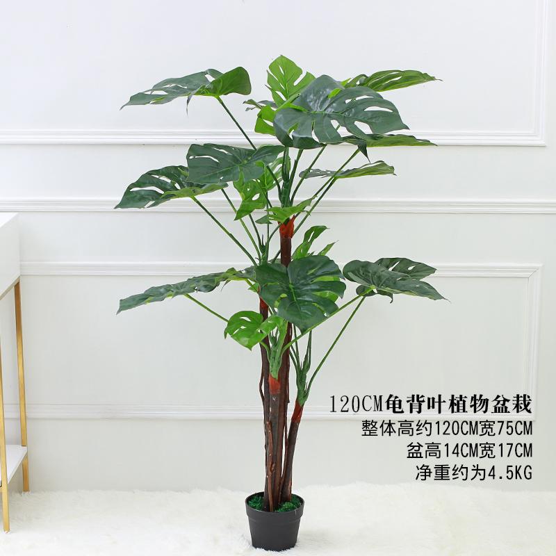 Цвет: 120 {#N30 может} черепашка листья 1