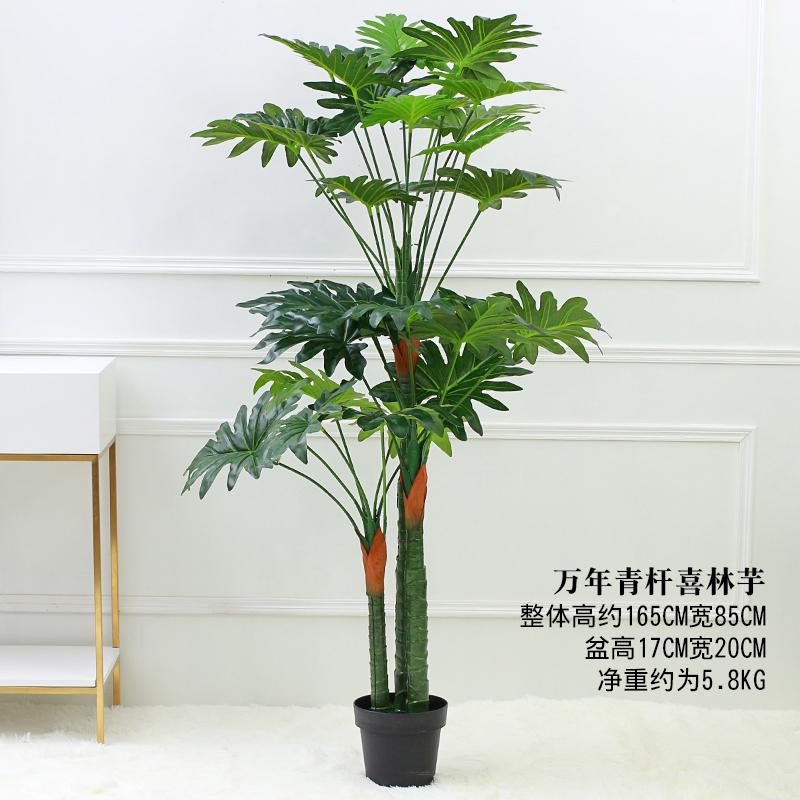 Цвет: 165 {#N30 может} вечнозеленых Хай Лин Таро