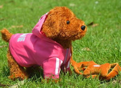 Цвет: Розовая собака парень Тедди