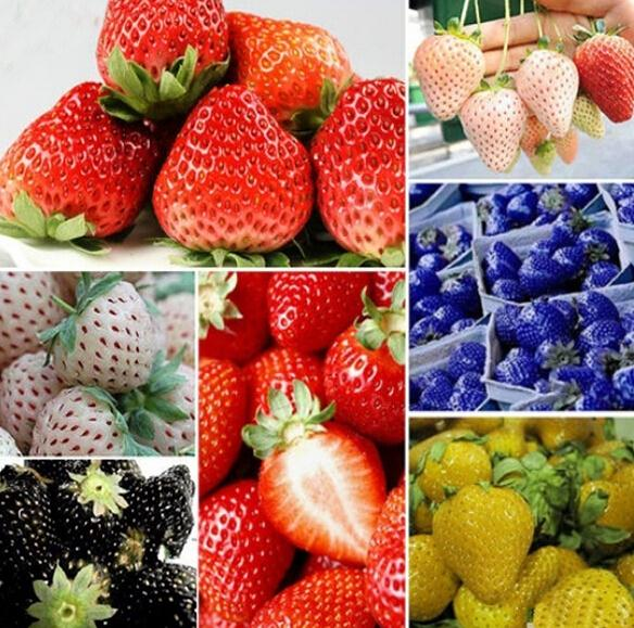 100Pcs Nutritious Delicious Strawberry Seeds Fruits Easy To