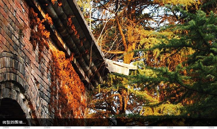 丨南京旅游梅花山梅花节钟山风景区中山陵园  补充说明 一, 观光车
