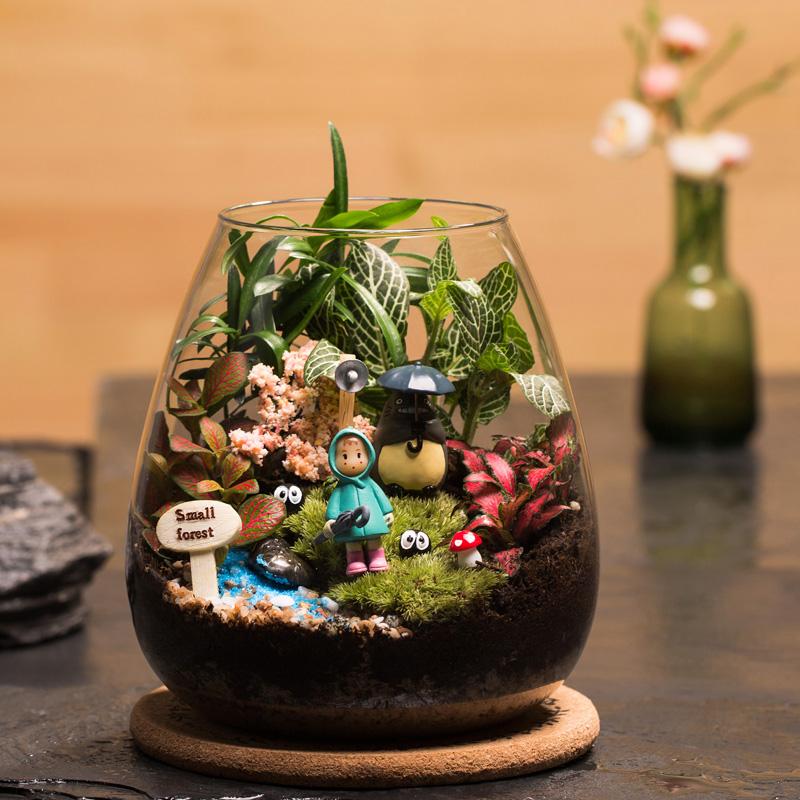 DIY自己的童话世界!微景观生态瓶