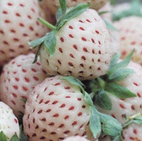100Pcs Nutritious Delicious Strawberry Seeds Fruits Easy