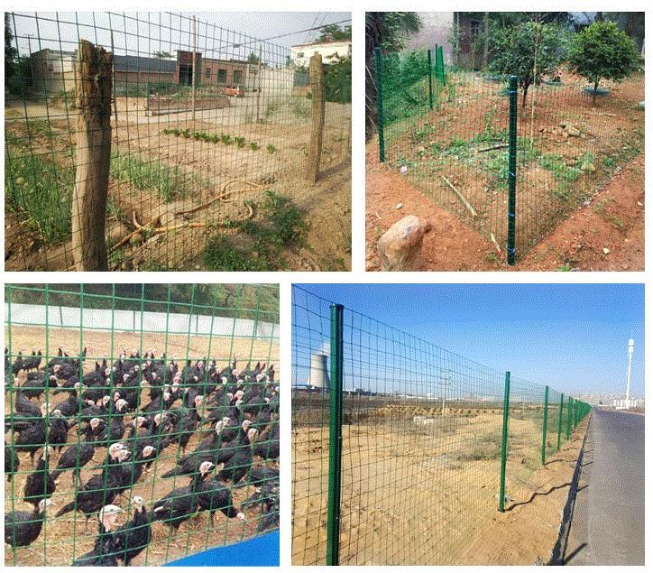 El alambre de púas de la cultura red aislada de la red de redes red de malla de plástico de pollo pollo doméstico detuvo cerca de red red de protección.