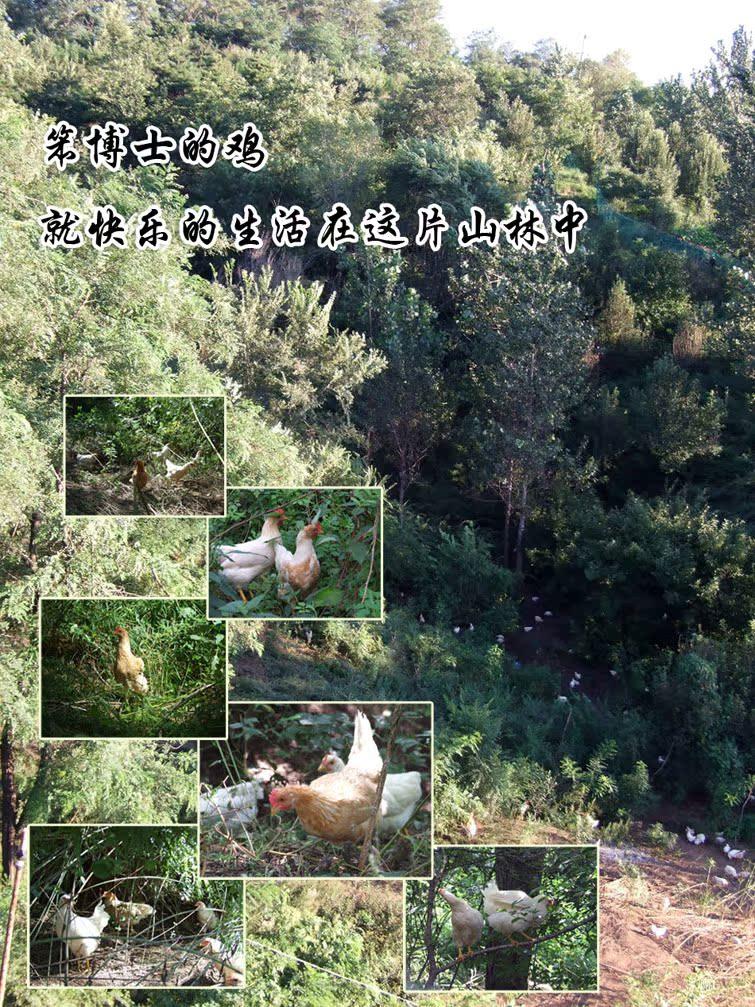 养殖场原图片