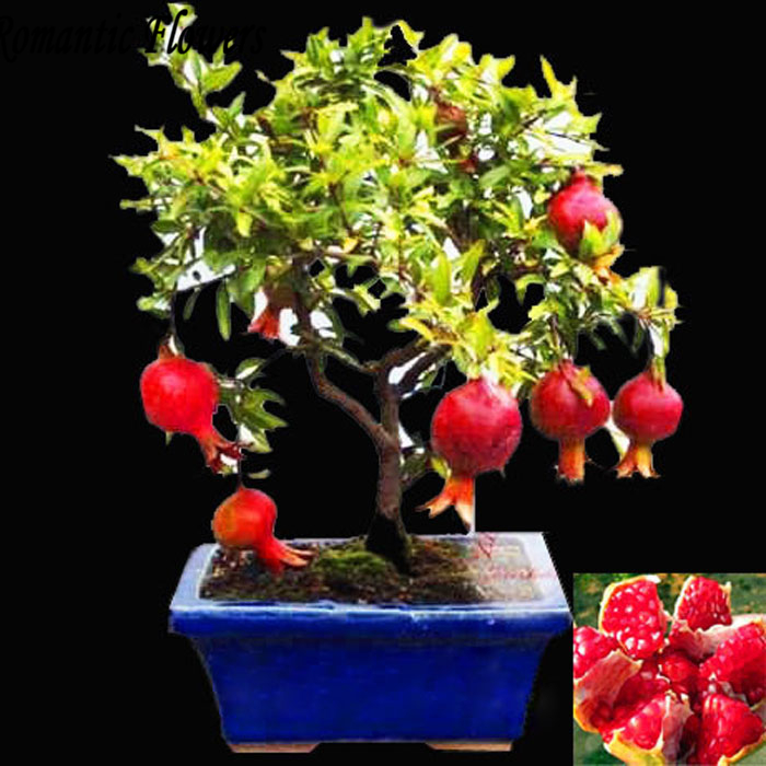 Bonsai Pomegranate Seeds Very Sweet Delicious Fruit Seeds,Su