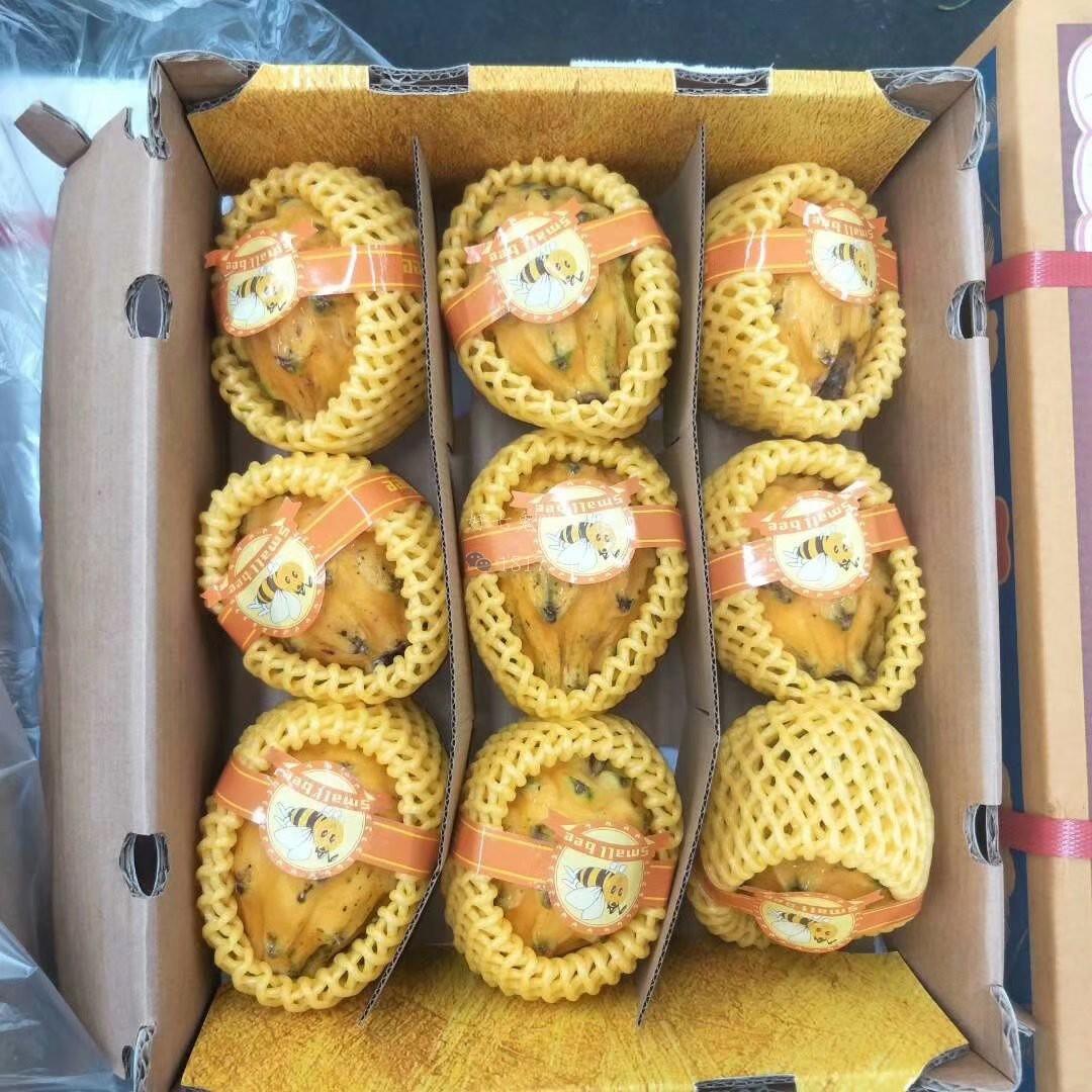 麒麟果2斤装新鲜水果包邮 哥伦比亚进口黄皮黄色火龙果6-9个包邮