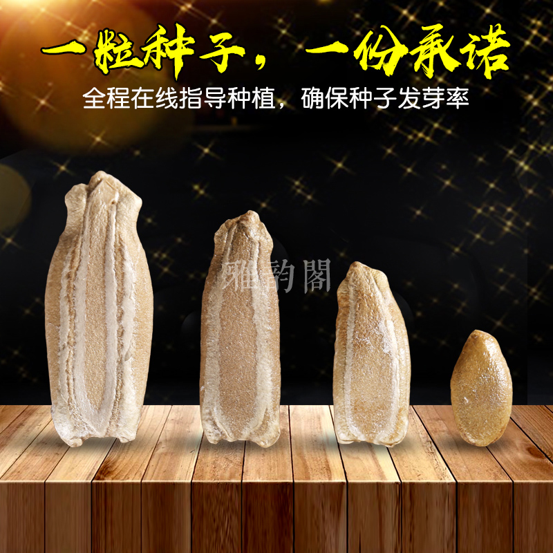 big giant natural big gourd seed garden balcony planting small collectables - autograph hand twist small gourd seeds seed