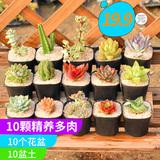 10款多肉植物组合【含盆含土】 券后8.8元起包邮0点开始