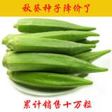 蔬菜种子青菜150粒秋葵30粒黄瓜20粒券后1.1元包邮