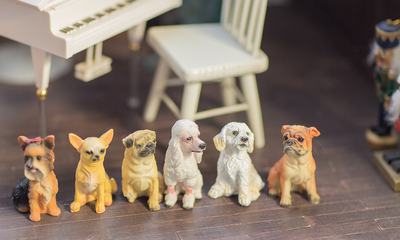taobao agent Doll shooting props, animals, dogs, bjd dolls, dogs